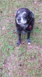 Dog - Mischievous Look